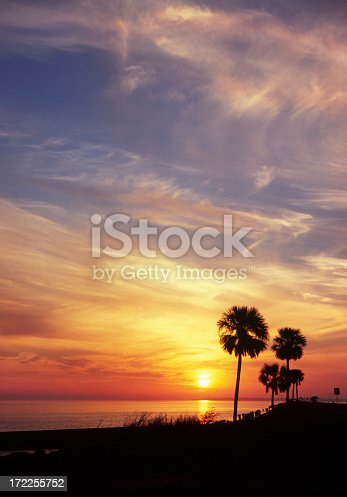 Vertical shot of palm trees and feathery clouds against a blue and orange sky.