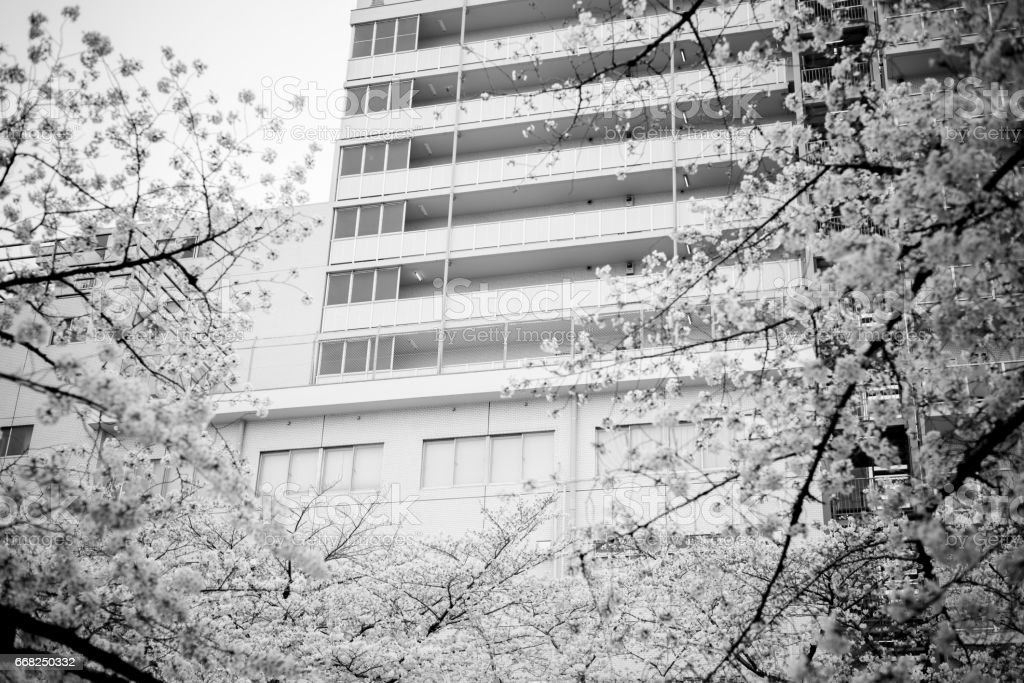 Apartment and cherry blossoms foto stock royalty-free
