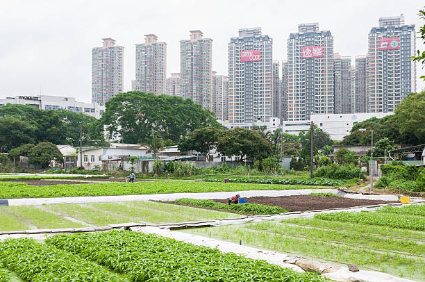 Apartment Development Next to Farm in Rural Hong Kong Hong Kong, China - May 4, 2014: Traditional farmers cultivate vegetable crops by hand in rural Hong Kong with new, modern apartment towers in the background. new territories stock pictures, royalty-free photos & images