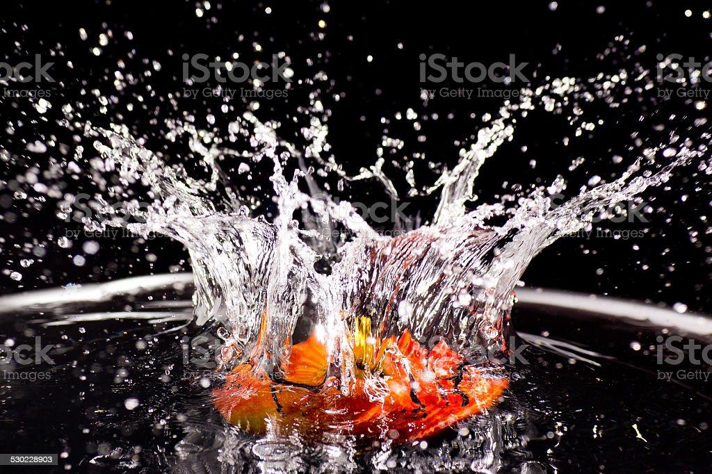 Apfel fällt ins Wasser und spritzt stock photo