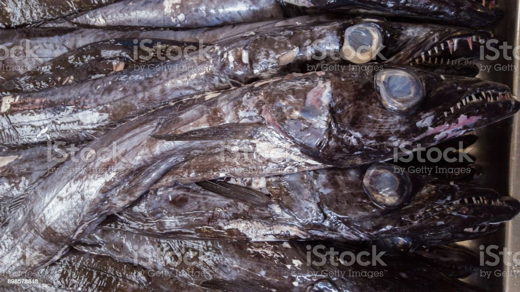 Aphanopus carbo or Espada - special fish for dinner in Madeira stock photo