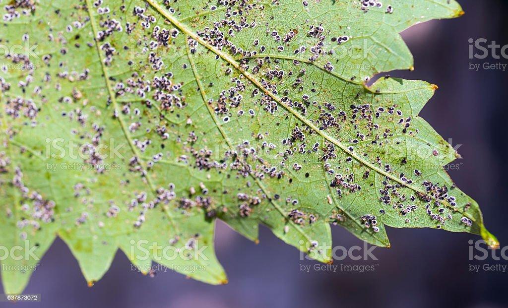aphid 6 stock photo