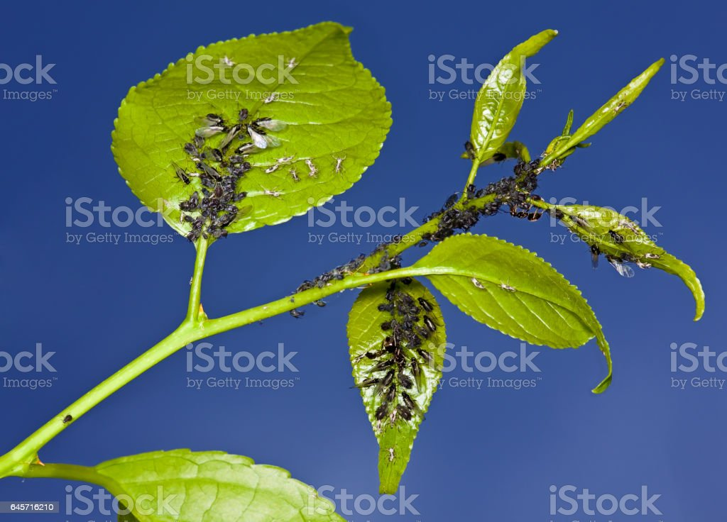 Aphid living and grey bag on a green stock photo