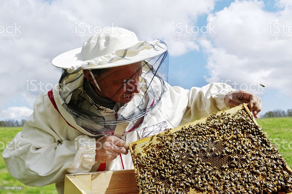 Apiarist and frame with bees. stock photo