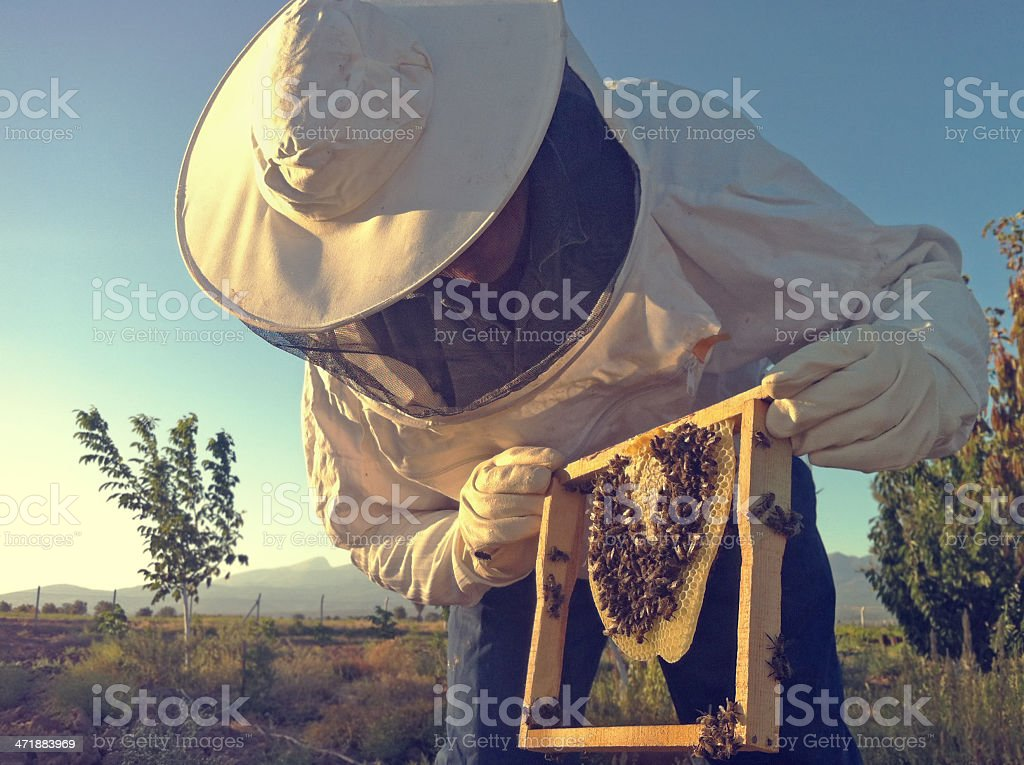Apiarist stock photo