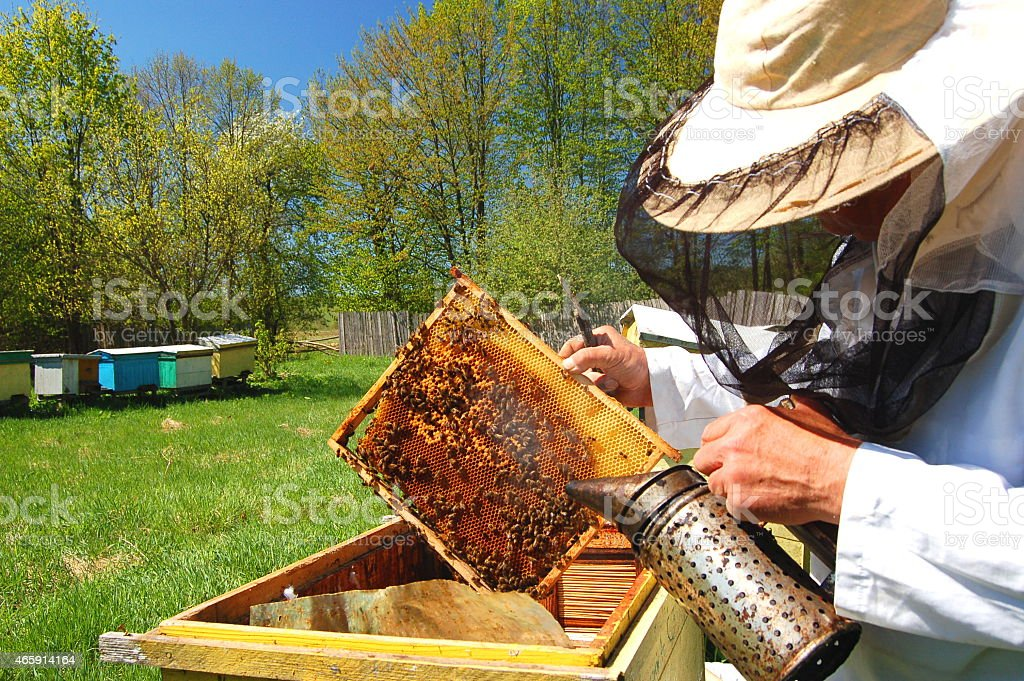 Apiarist working in his apiary in the springtime stock photo