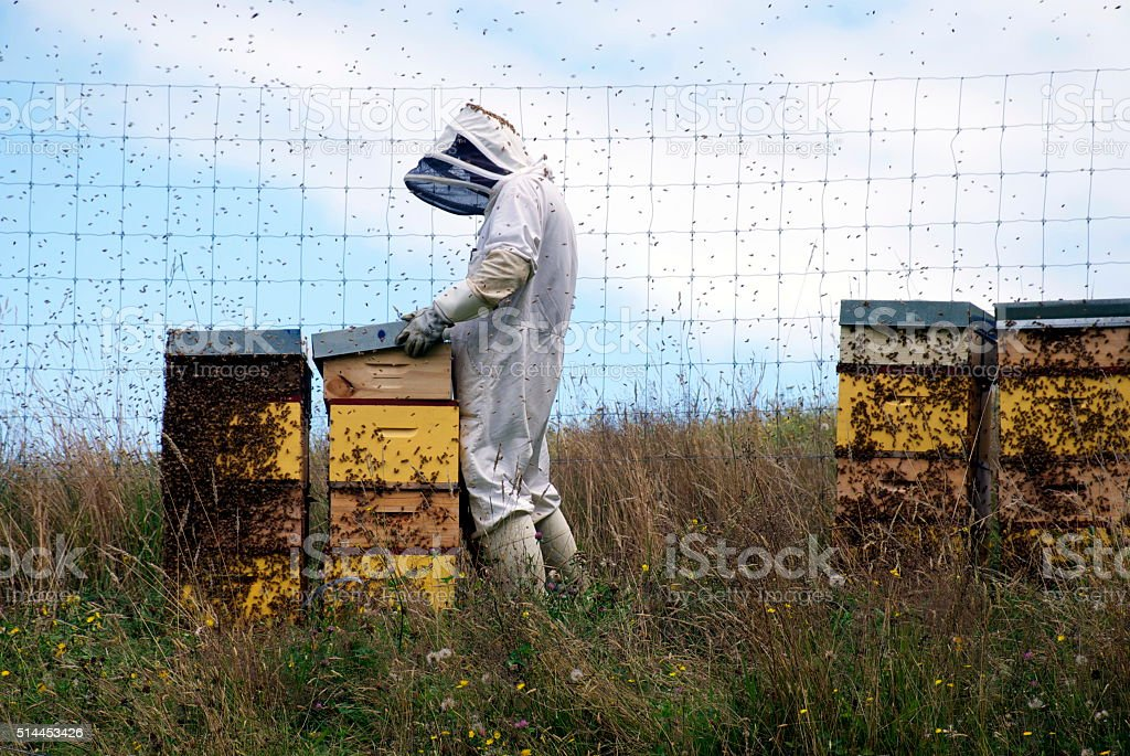 Apiarist working with Beehives stock photo