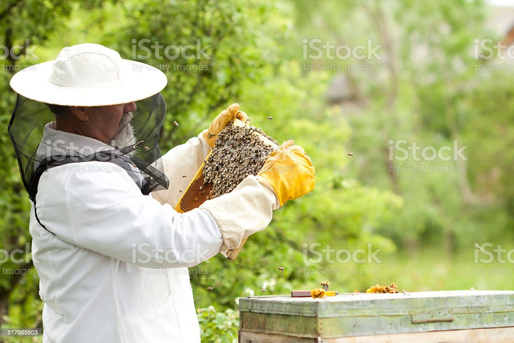 Apiarist working with bees stock photo