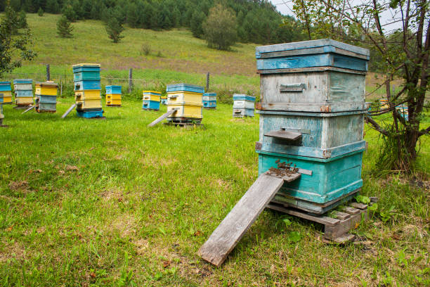 Cтоковое фото Apiary in the Altai mountains.