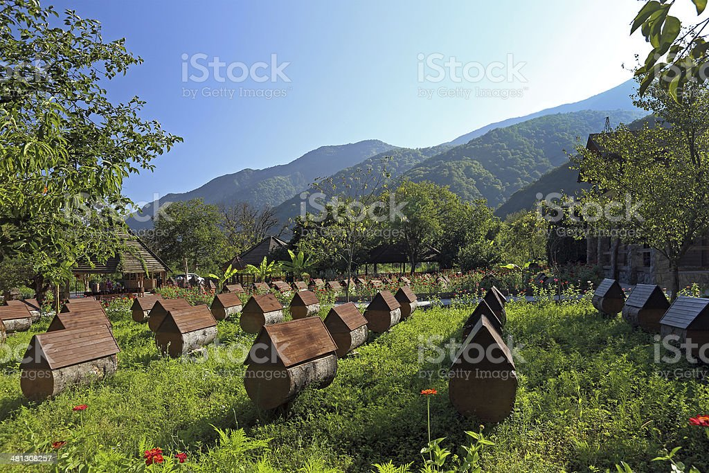 Apiary stock photo