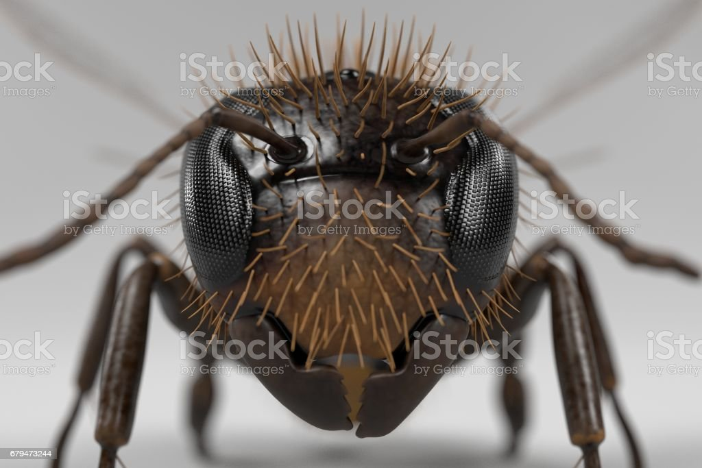 apis melifera royalty-free stock photo