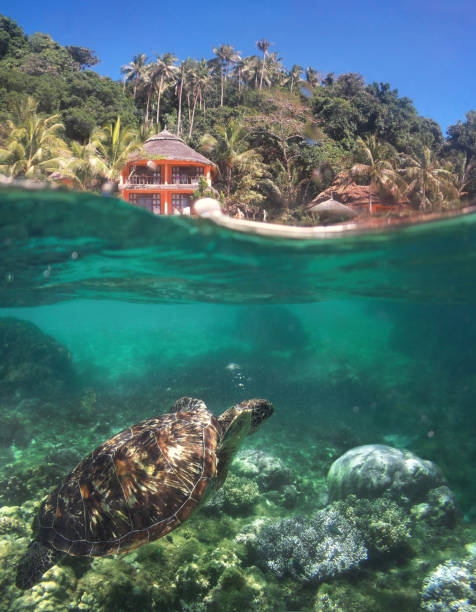 Apo island underwater scene Over-under view of beautiful coastline and scenic coral reef apothegm stock pictures, royalty-free photos & images