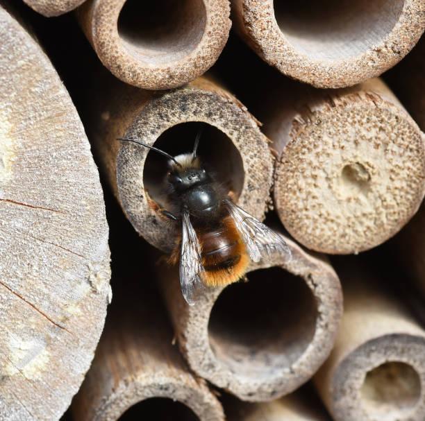 Apoidea, Hymenoptera, Insektenhotel, Tierwelt – Foto