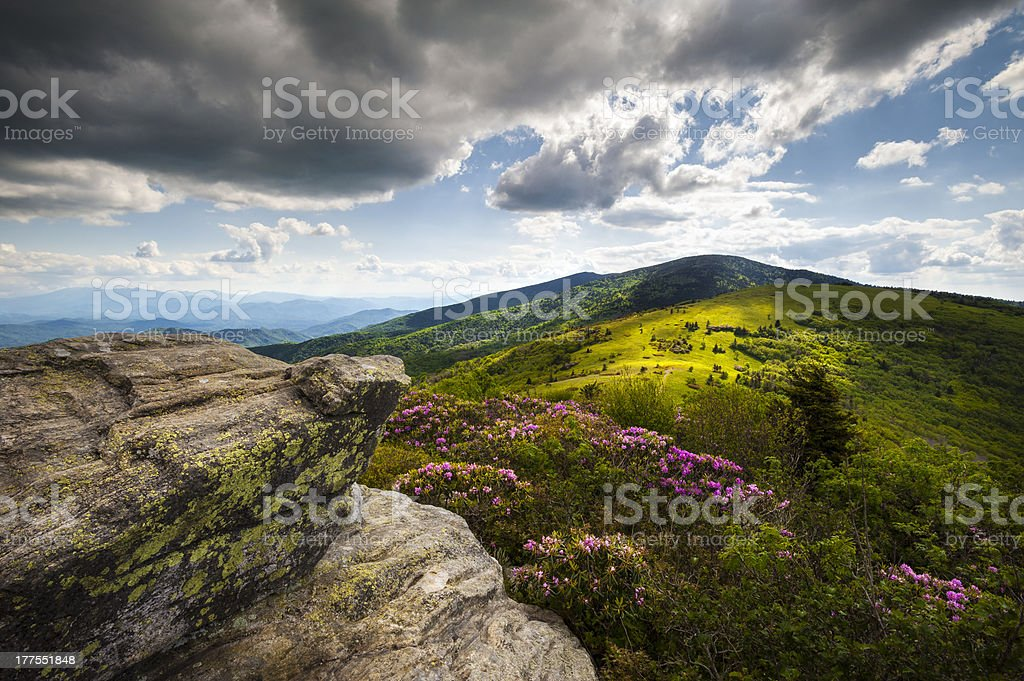Appalachian Landscape Roan Mountain Highlands Rhododendron Flowers NC Spring Blooms stock photo