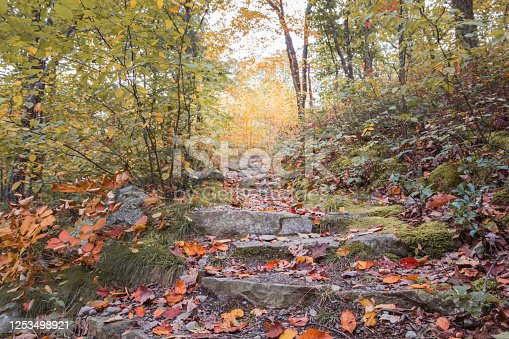Appalachian Trail at High Point State Park NJ with brilliant fall foliage, hiking alone, social distancing