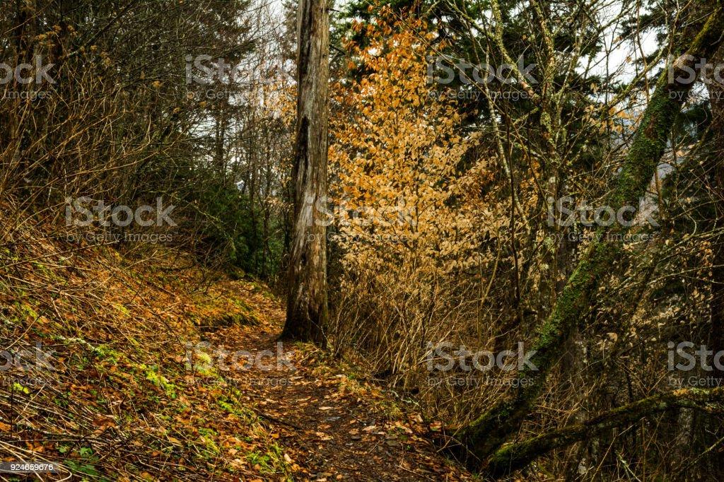 Appalachian Trail at Newfound Gap stock photo