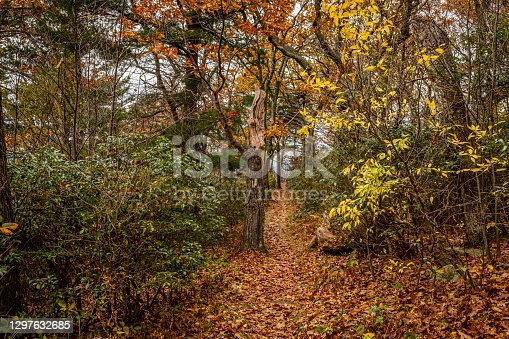 istock Appalachian Trail in Shenandoah National Park 1297632685