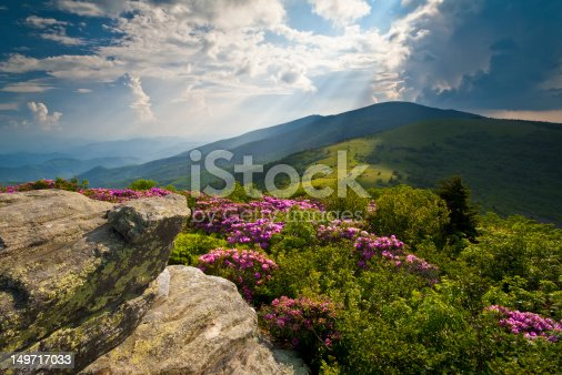istock Appalachian Trail Roan Mountains Rhododendron Bloom on Blue Ridge Peaks 149717033