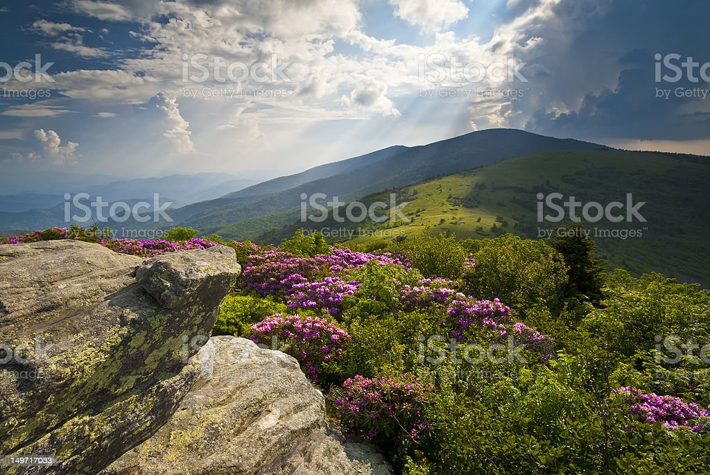 Appalachian Trail Roan Mountains Rhododendron Bloom on Blue Ridge Peaks stock photo