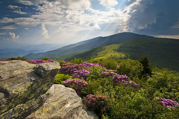 Appalachian Trail Roan Mountains Rhododendron Bloom on Blue Ridge Peaks Appalachian Trail Roan Mountains Rhododendron Bloom on Blue Ridge Peaks scenic landscape photography appalachia stock pictures, royalty-free photos & images