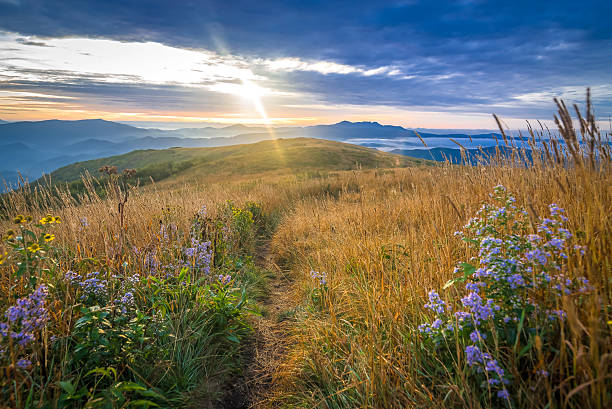 Appalachian Trail Sunrise The ancient Blue Ridge Mountains come alive when the morning sun rises over the Roan Mountain Highlands exposing the beautiful wildflowers. appalachian trail stock pictures, royalty-free photos & images