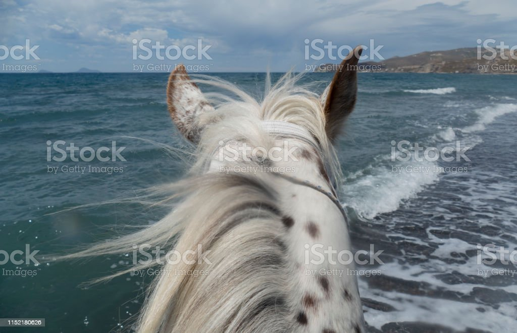 Appaloosa Horse Looking At The Oceaan Stock Photo Download Image Now Istock