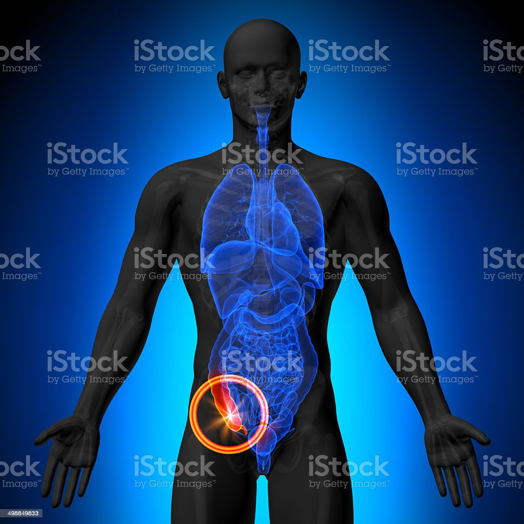 Appendix - Male anatomy of human organs - x-ray view stock photo