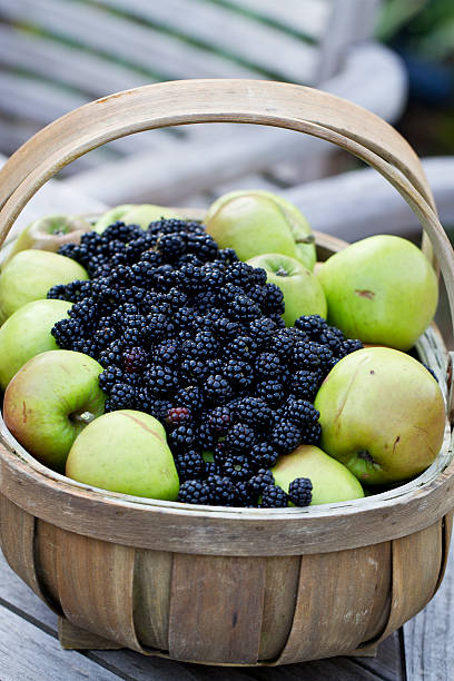 Apple and blackberry Wooden Trug stock photo