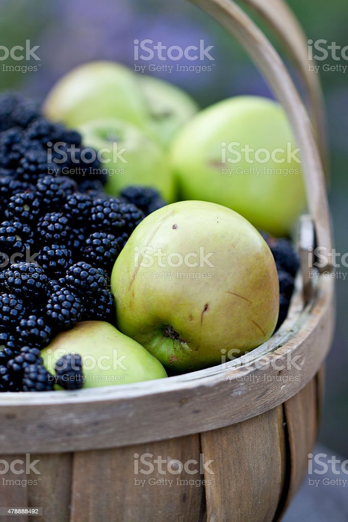 Apple and blackberry Wooden Trug stock photo