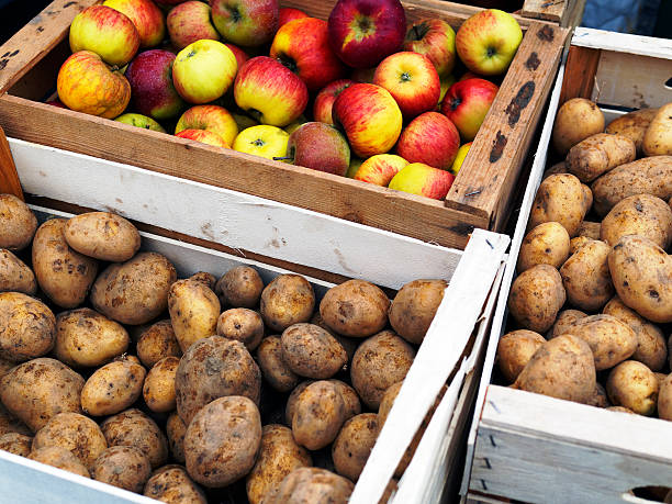 Apple und Potate.  Color Image – Foto