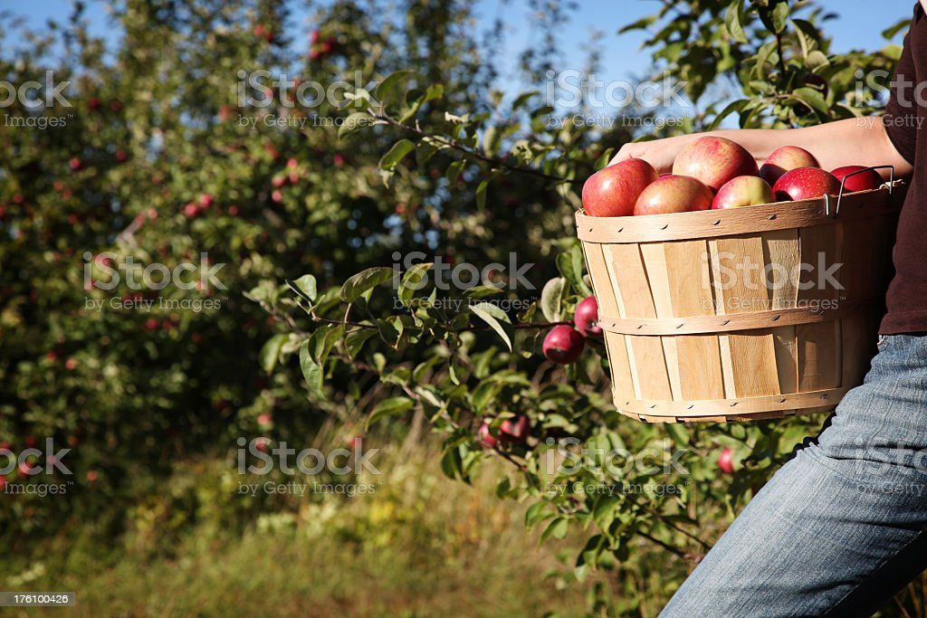 Apple bascket stock photo
