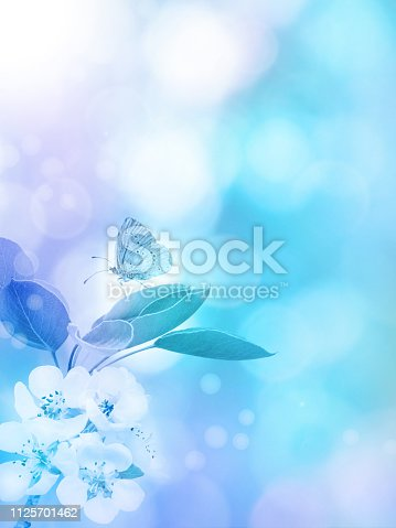 Apple blossom and butterfly on the blurred blue vertical background. Spring flowers.