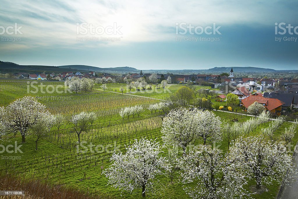Apple blossom and typical german village royalty-free stock photo