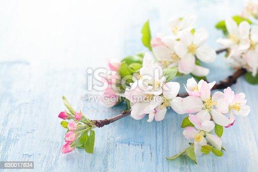 istock Apple blossom on blue. 630017634