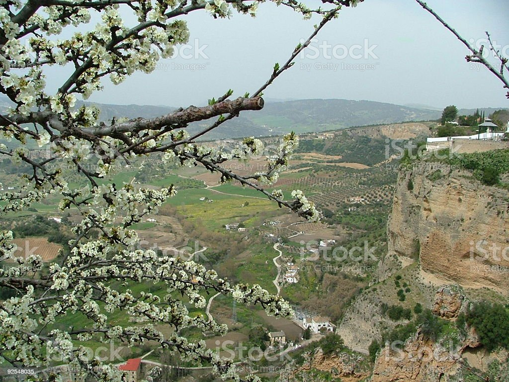 Apple Blossoms in Ronda royalty-free stock photo