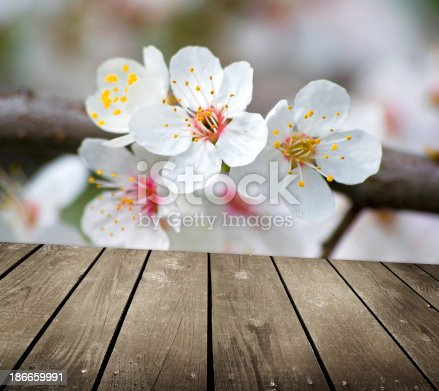 948743278istockphoto apple blossoms in spring and empty wooden deck table 186659991