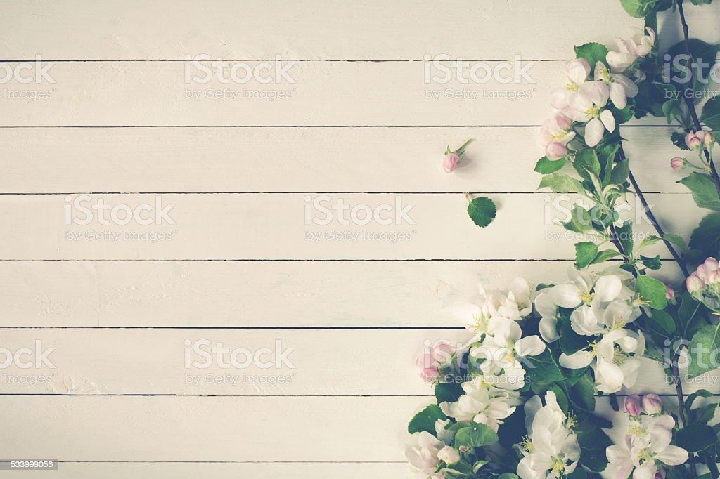 Fondo De Madera Vintage Con Flores Blancas Manzana Y: Fotografía De Manzana Flores Sobre Fondo De Madera Blanco