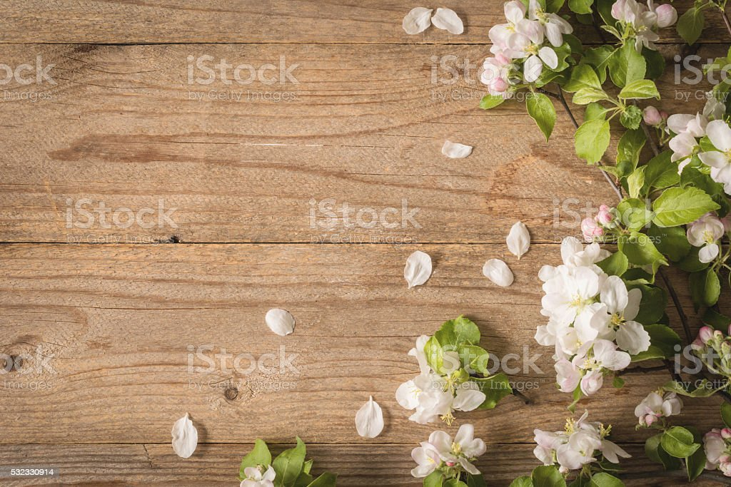Apple blossoms on wooden background stock photo