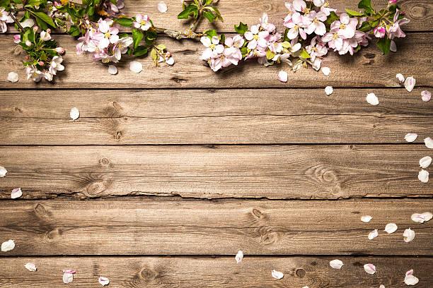 apple blüten auf holz oberfläche - holzblumen stock-fotos und bilder