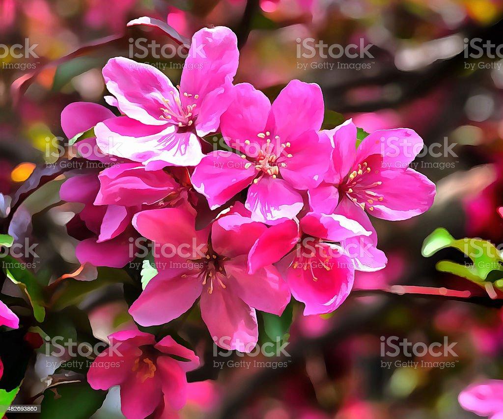 Apple blossoms #3 stock photo