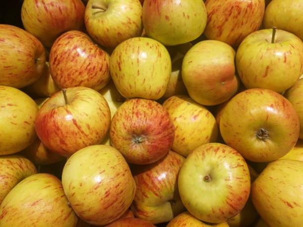 0745 Apple - brand cox orange - fruit stock photo