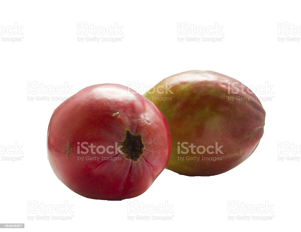 Apple cactus . royalty-free stock photo