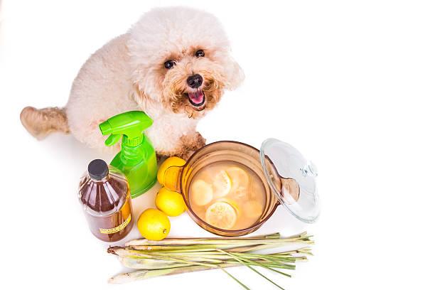 apfelwein-essig, zitrone und zitronengras effektive floh wasserabweisende - hundezubehör diy stock-fotos und bilder