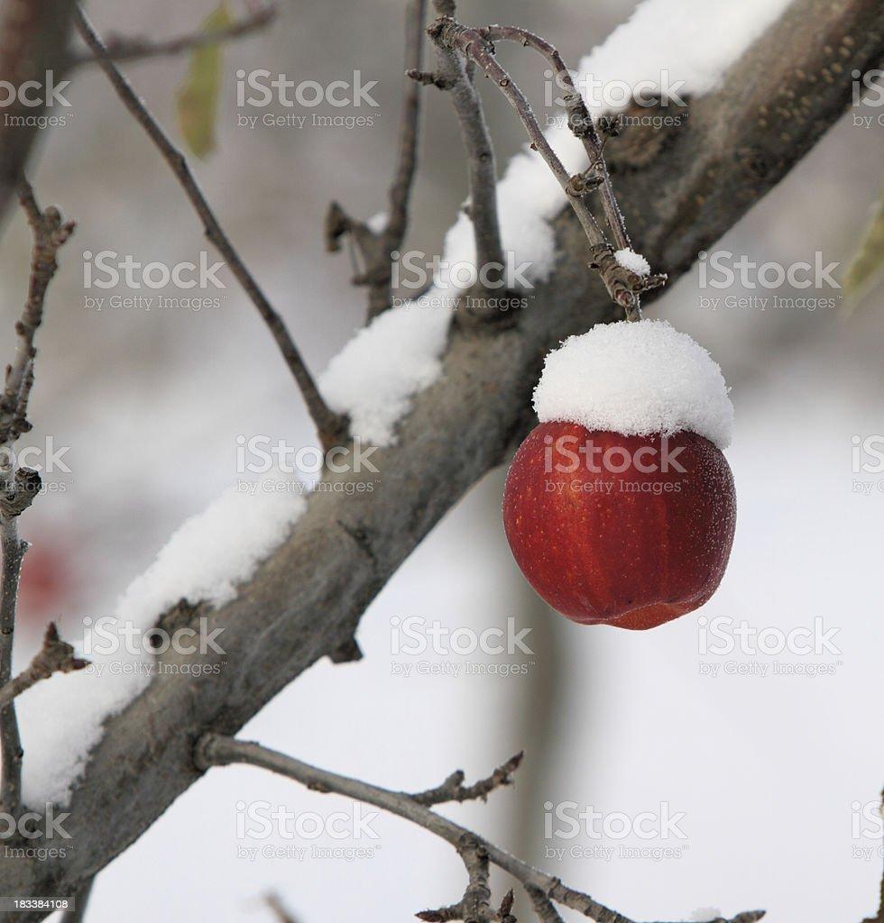 Apple farm stock photo