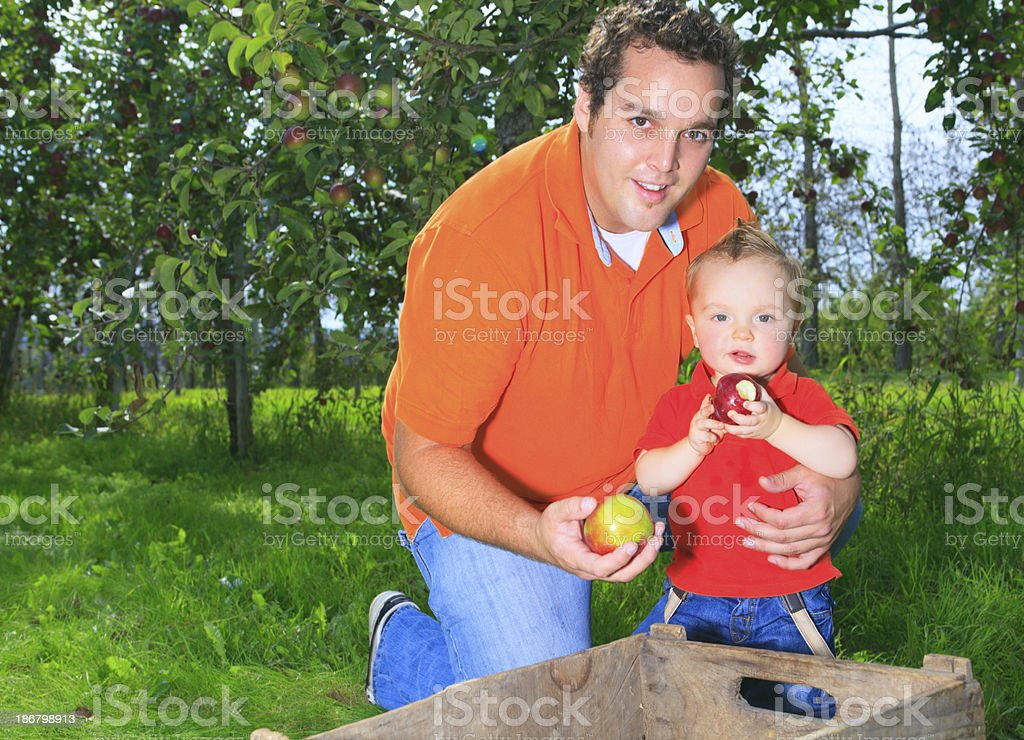 Apple Father - Beautiful Picture royalty-free stock photo