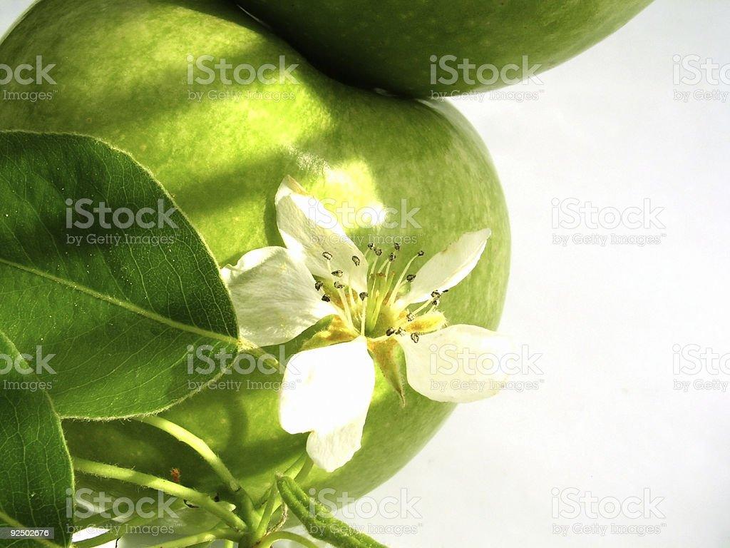 apple & flower royalty-free stock photo