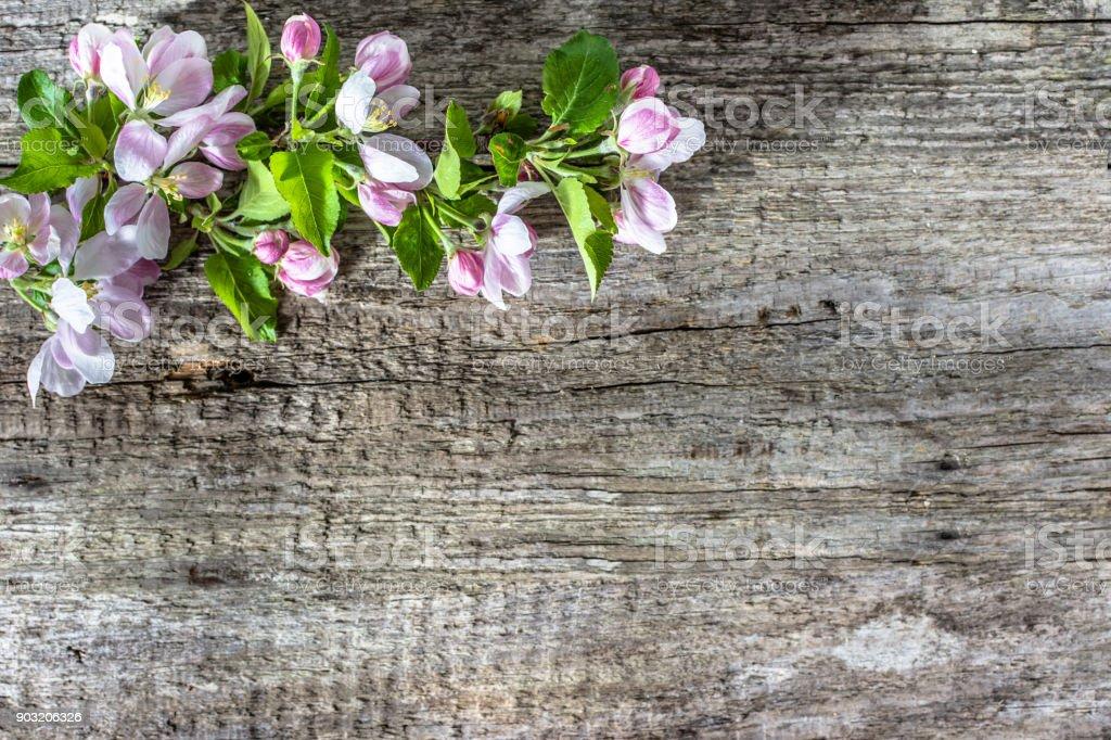 Apple flower, spring blossom on wooden background stock photo