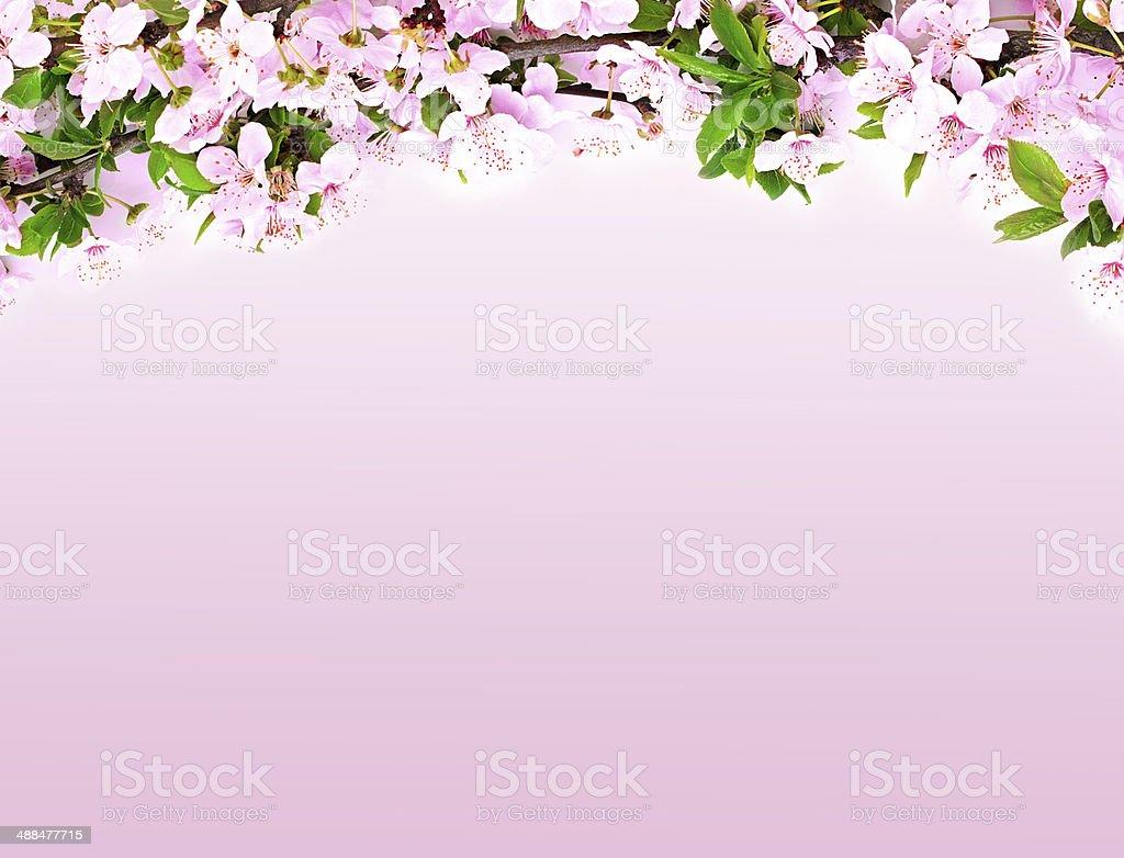Ramo Di Fiori Di Mela Su Sfondo Rosa Fotografie Stock E Altre