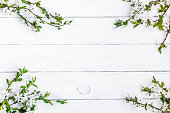 apple flowers on white wooden background
