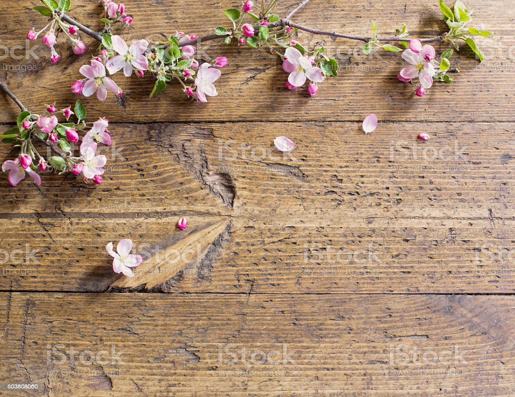 apple flowers on wooden background stock photo